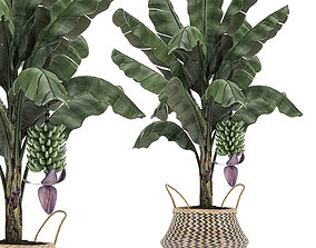 3D Decorative Banana tree in a basket for the interior 487