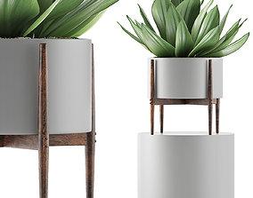 Plants Collection 73 3D
