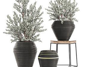 Eucalyptus bush in a flowerpot for interior design 535 3D