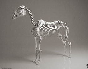 3D Horse Skeleton stallion