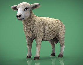 3D asset VR / AR ready SHEEP