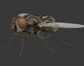 3D model realtime fly housefly