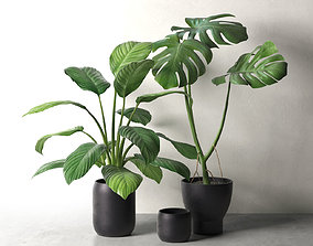 3D model Sinnerlig Pots with Monstera and Peace Lily