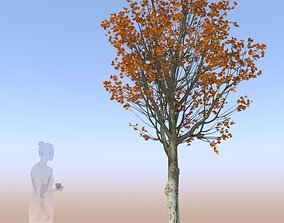 3D model maple tree acer young autumn B
