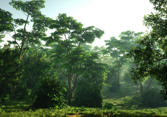 Forest Time of Day Cycle (UE4)