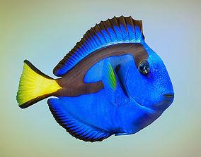 3D asset Fish Paracanthurus hepatus