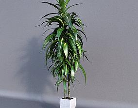 3D model Dracaena Plant