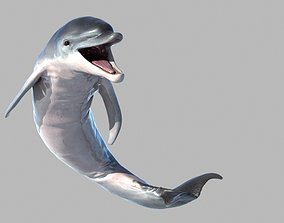 3D animated animal Dolphin
