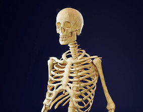 3D asset VR / AR ready Skeleton - Human