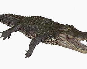 Alligator Crocodile Rigged animated 3d animated