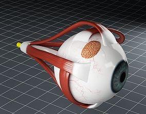 3D model Anatomy eye