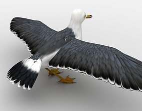 Black-tailed Gull 3D asset