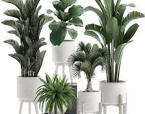 3D model Decorative plants in a white flowerpot