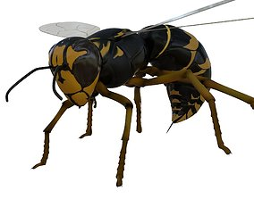 3D Wasp Rigged