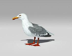 3D model Seagull