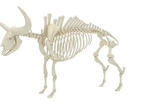 cattle 3D Bison Latifrons