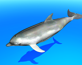 3D asset animated realtime Dolphin