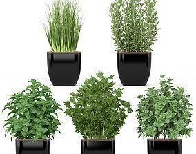 3D Plants collection 232