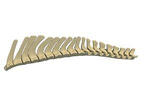 animal 3D Animal Spinal Column 78