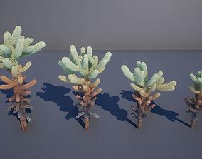 Cholla cactus 3D asset
