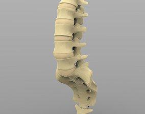 3D Lumbar Vertebrae
