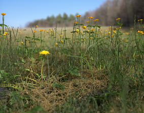 3D Plant Pack Meadow