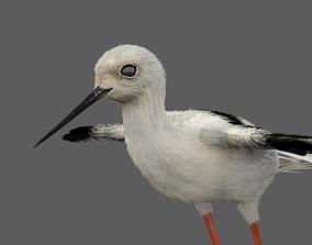 3D model Realistic Stilt bird with feather