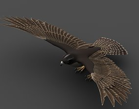 3D model rigged Falcon