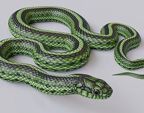 3D model Animated Green Snake
