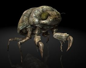 Insect Collection 24 Young cicadas 3D asset