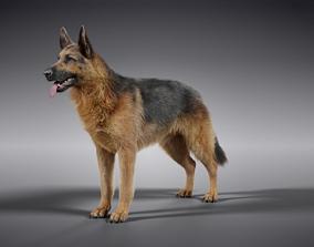 German Shepherd 3D model rigged