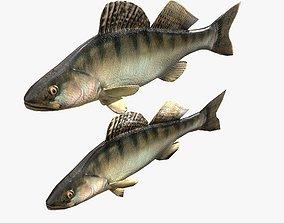 Fish Bersh 3D model animated