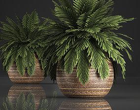 3D Decorative palm in a basket 826