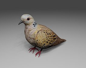 3D Dove - Bird - Pomba