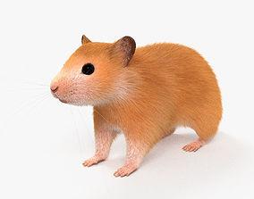 3D model Hamster HD