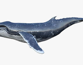 3D model Humpback Whale Animated