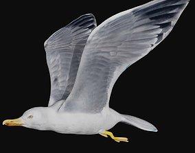 3D model rigged VR / AR ready Seagull