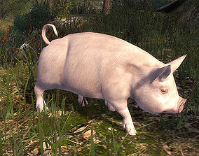 3DRT - Pig animated