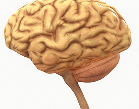 Human Brain 3D model low-poly