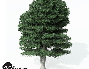 XfrogPlants Cutleaf European Beech 3D model