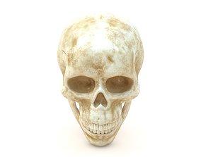3D model Male Human Skull