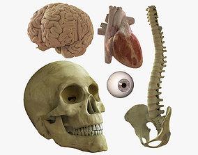 3D model Skull Heart Brains Eye Spine