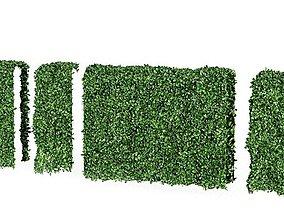 Tall Hedge Plant 3D model
