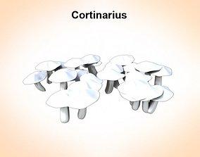 ortinarius 3D