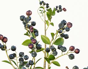 3D model blue berry bushes component