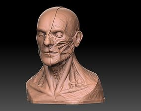 3D printable model Human Head Artistic Anatomy