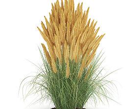 3D model Ornamental Grass 2