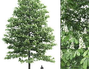 park Chestnut-tree 01 H15m 3D