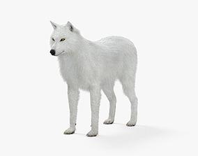 Arctic Wolf HD 3D model