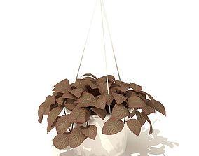 Hanging Leaf Plant 3D model